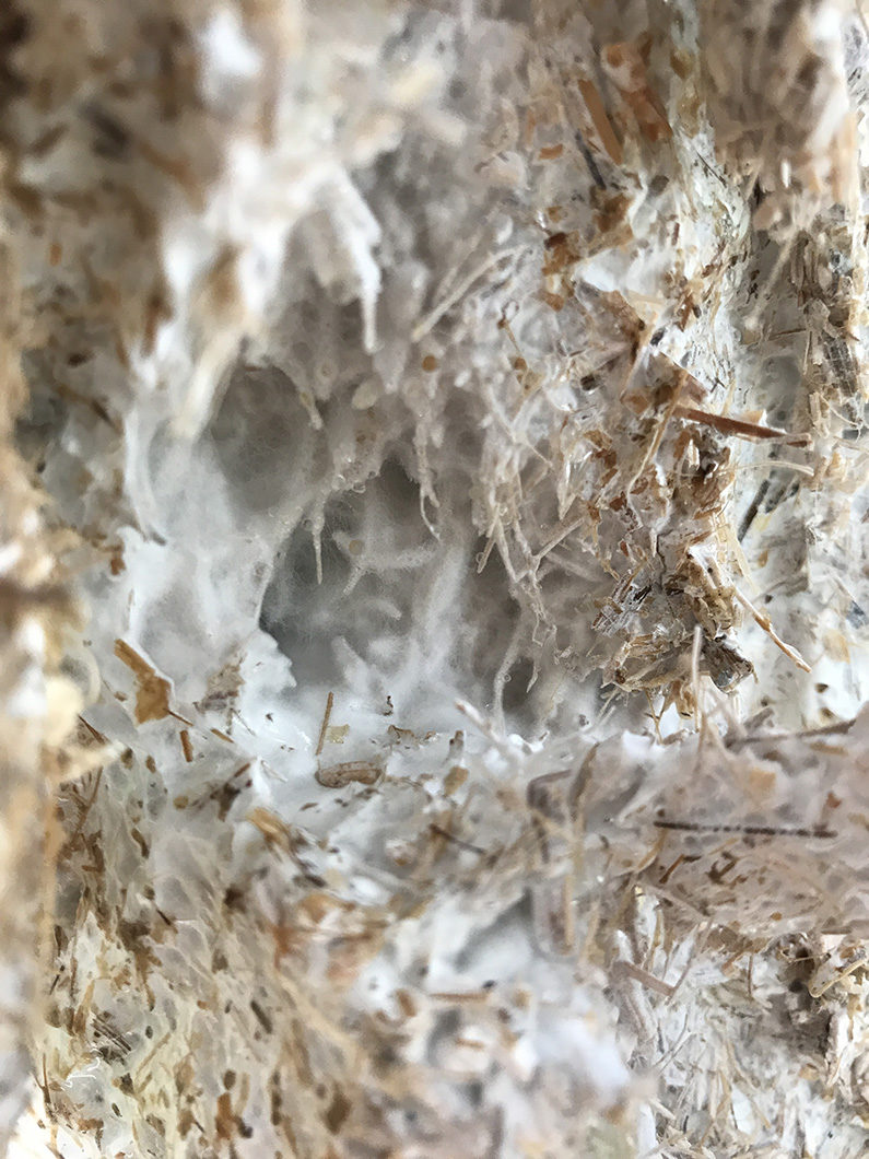 Spring 2017 Innovation Incubator – Tactical Mycelium